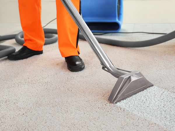 South Jersey Carpet Cleaning
